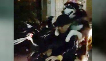 Chó đội mũ bảo hiểm ở Đà Lạt gây sốt ở châu Âu