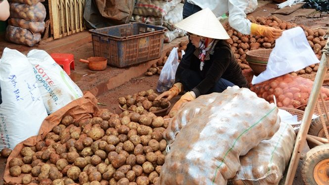 Đà Lạt nhập 100 tấn khoai tây Trung Quốc về bán