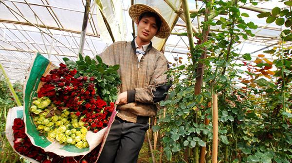 Tour làng hoa vạn thành Đà Lạt 1 ngày