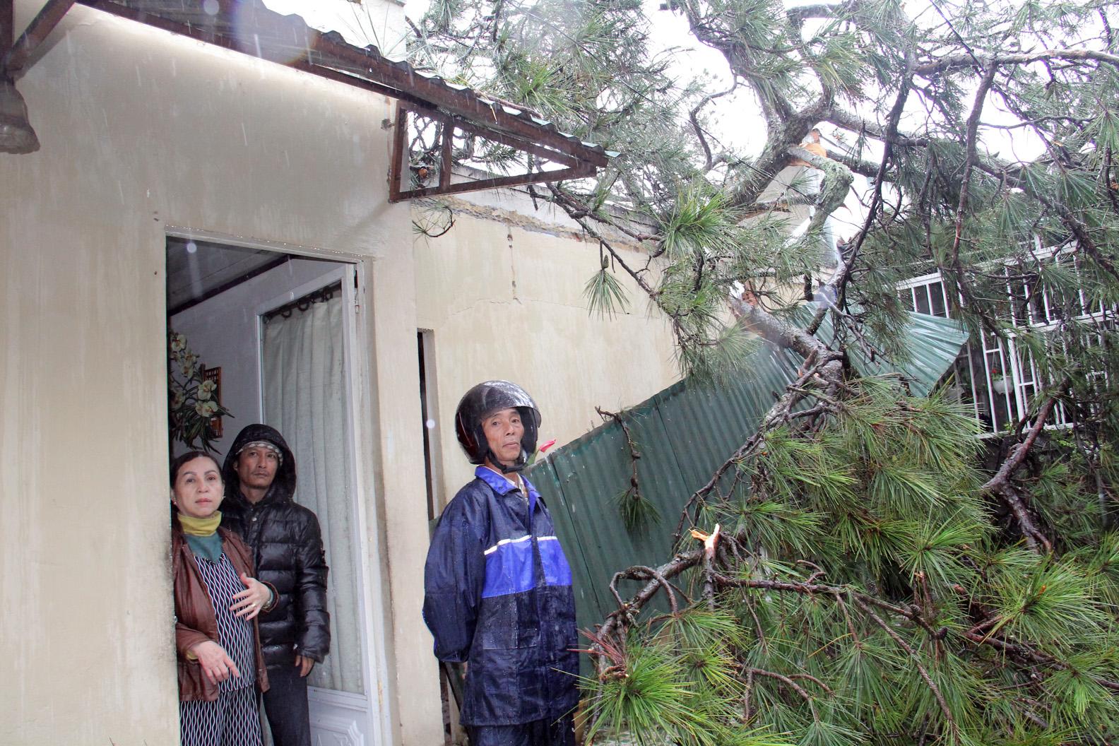Cập nhật tình hình bão số 12 tại Lâm Đồng