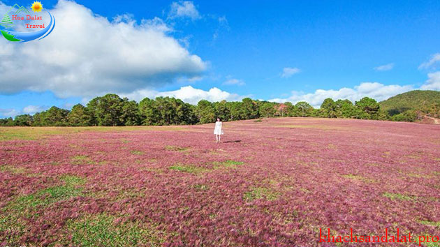 Tour đồi cỏ hồng - đồi chè cầu đất 1 ngày giá rẻ