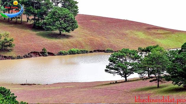 Tour đồi cỏ hồng - đồi trè cầu đất 1 ngày giá rẻ