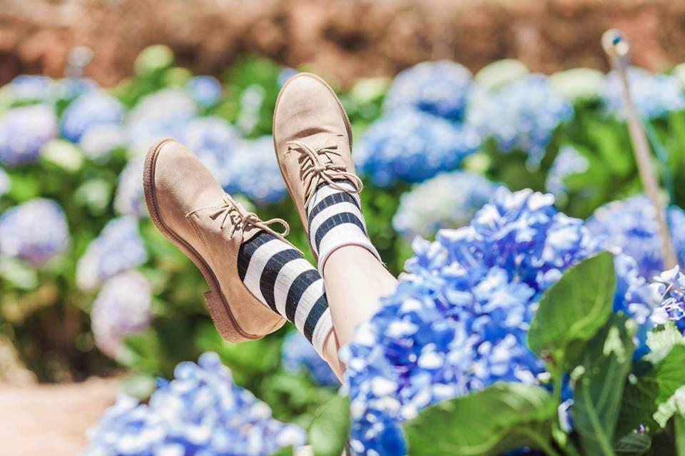 địa chỉ vườn hoa cẩm tú cầu