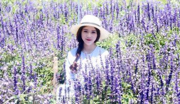 Cánh đồng hoa Lavender lớn nhất ở Đà Lạt đang làm cư dân mạng mê mẩn và sôi sục muốn check-in
