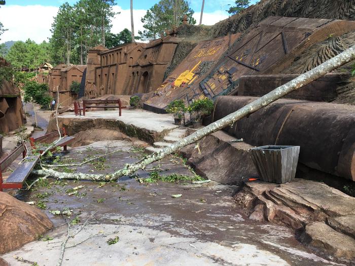 Cây rừng ngã đè tử vong 1 du khách ở Đà Lạt