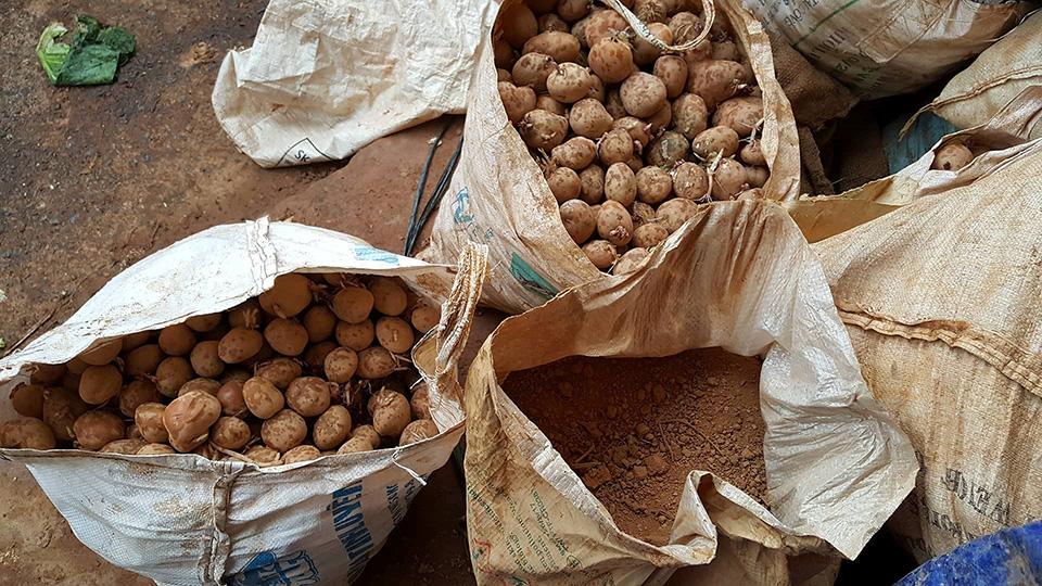 Tiểu thương Đà Lạt trộn đất vào khoai tây trung quốc để bán giá cao