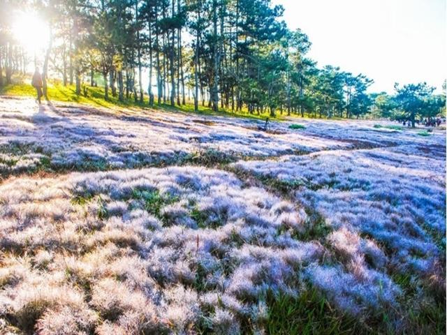 Địa chỉ đồi cỏ hồng đà lạt
