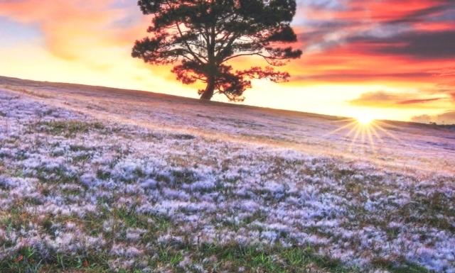 Đồi cỏ hồng Đà Lạt tháng mấy