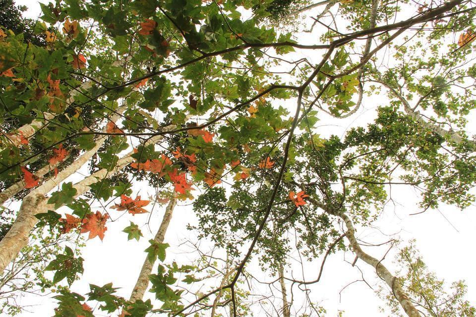 Du lịch Đà Lạt mùa này có gì đặc biệt ? Những lưu ý và kinh nghiệm khi đi Đà Lạt tháng 10