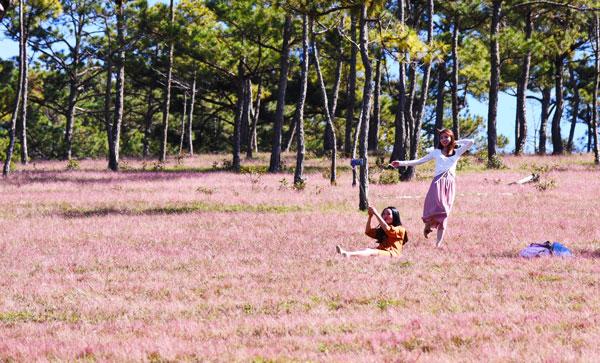 Du khách nườm nượp đổ về Đà Lạt check in đồi cỏ hồng